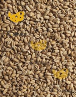 Пшеничный Mail OY (Финляндия)